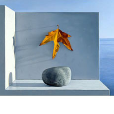Still Life with Rock and Leaf